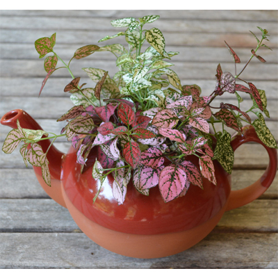 Red Glazed Extra Large Teapot Planter