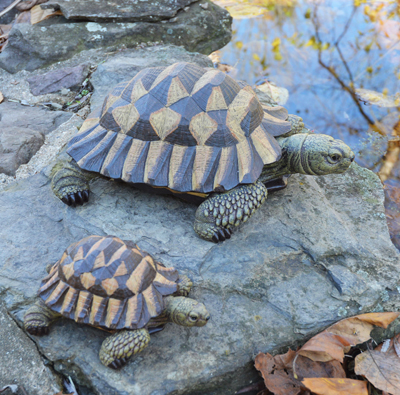 Large Brown Resin Tortoise