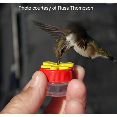 HUM-Button™ Hand Held Hummingbird Feeder (single)
