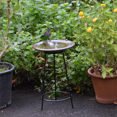 Pottery Birdbath & Garden Stand Combo
