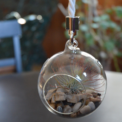 "4"" Hanging Glass Terrarium"