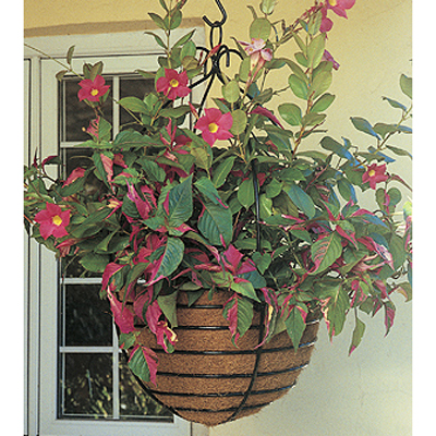 "17"" Monarch Hanging Basket & Coco Liner Set"