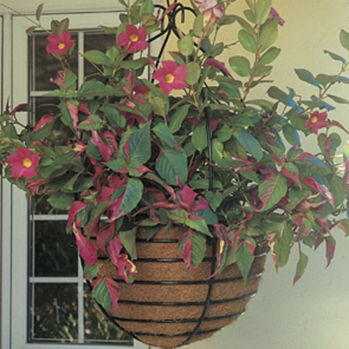 20 Inch Monarch Hanging Basket & Coco Fiber Liner Set
