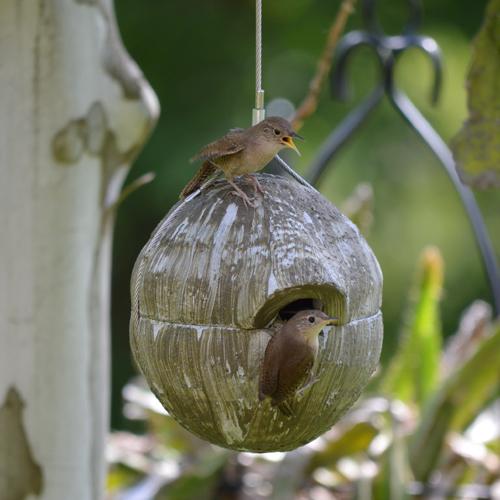 Green Nesting Ball for Wrens Birdhouse