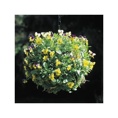 Medium Floral Globe
