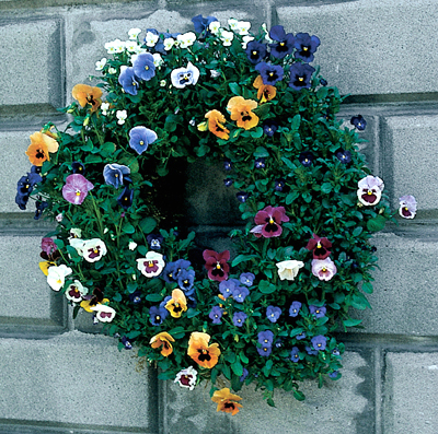 Small 16 Inch Living Wreath Form with Jute Liner
