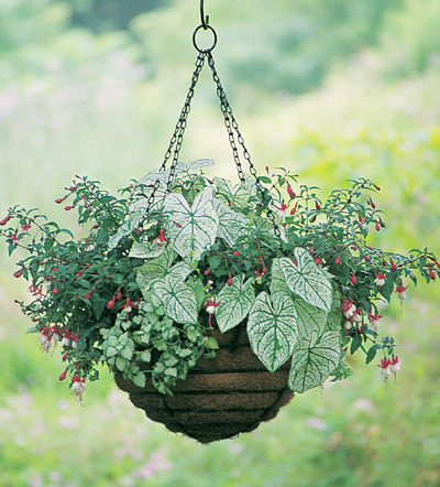 "12"" Old Fashioned Hanging Basket  & Coco Fiber Liner Set"