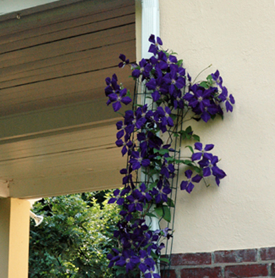 Downspout Cover Trellis