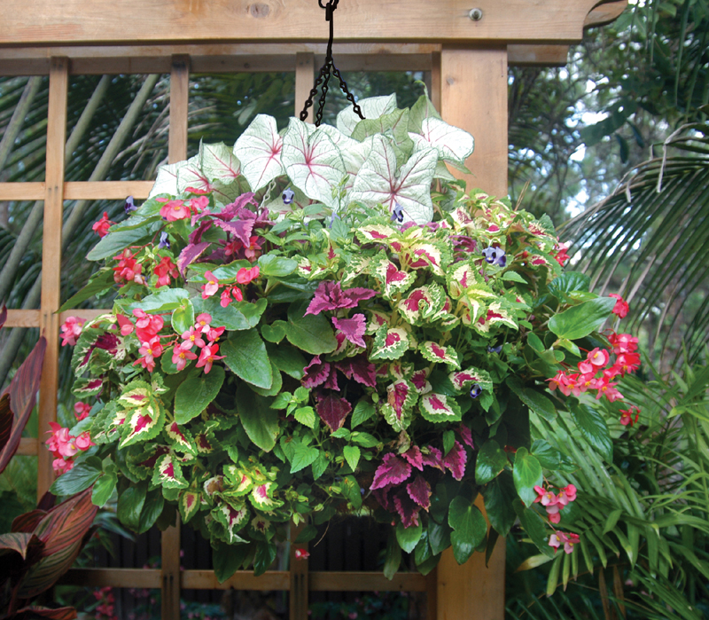 Flowers For Hanging Baskets In Part Shade : Hanging planter photo gallery