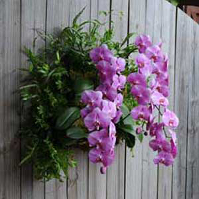 Living Wall Planters by Pamela Crawford