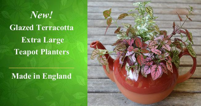 Terracotta Teapot Planters