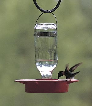 CS/24 SMALL 8 OZ HUMMINGBIRD FEEDER
