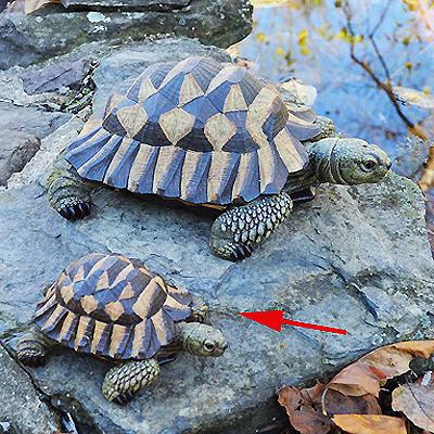 CS/3 - Small Resin Tortoise