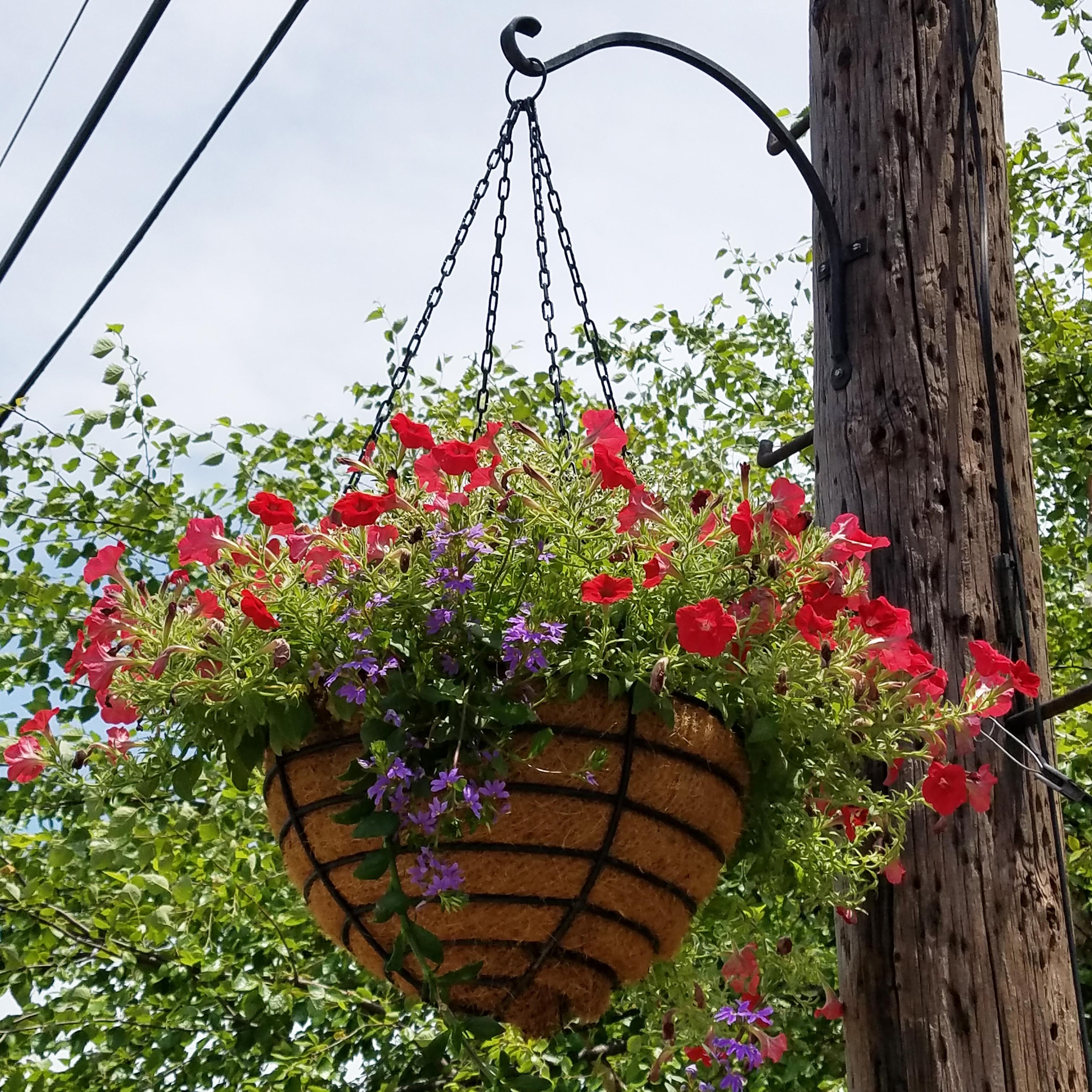 Cs/5 - 20 Diameter Old Fashioned Hanging Basket