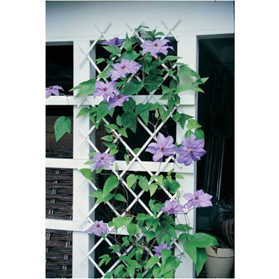 Cs/5- Expandable White Trellis 78 x 19-1/2