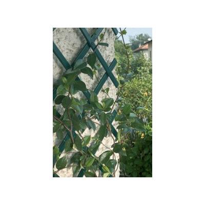 Cs/3 - Expandable Green Trellis 78 x 39