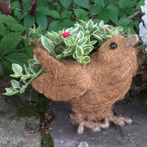 Cs/5 - Berrie Topiary Bird Planter