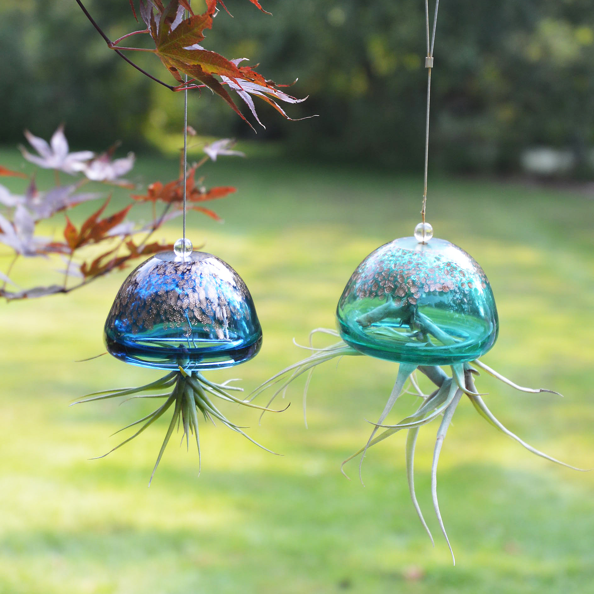 Jellyfish Air Plant Hangers (2 Color Choices)