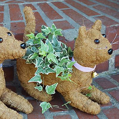 Cs/5 - Kitty Topiary Coco Planter - Kitten