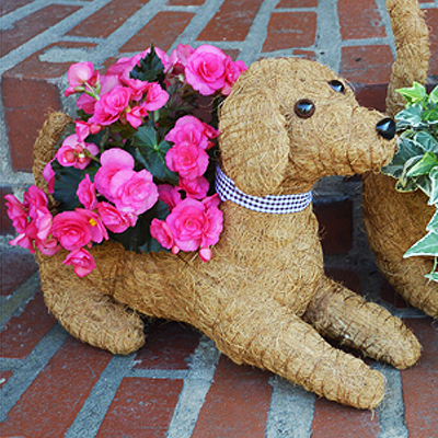 Cs/5 - Rocky Topiary Coco Planter - Lying Down Dog
