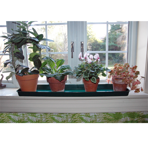 Windowsill Trays