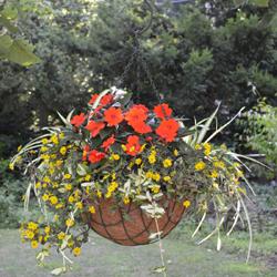 Grower Hanging Baskets