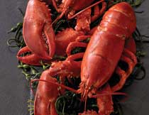Lobsters for Two ( 1.25 lb. Lobsters)