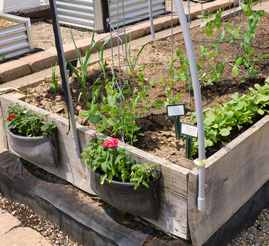 Not afraid of a little dirt? You've come to the right place. Get your garden growing.