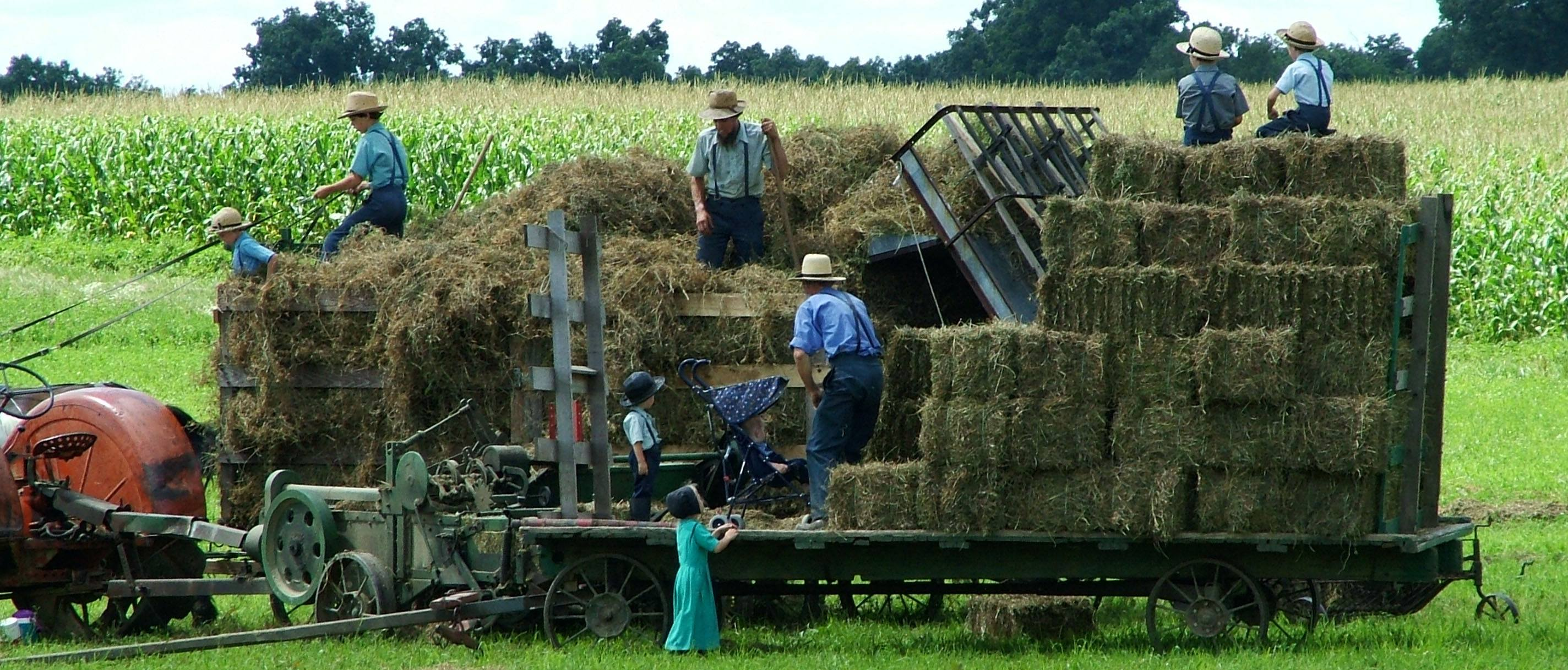 Amish family bailing hay