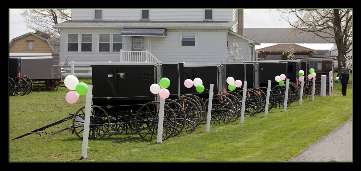 Decorated buggies waiting outside of farm house for Amish wedding party