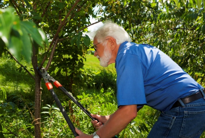 Maintaining acres of trees requires careful pruning and maintenance.
