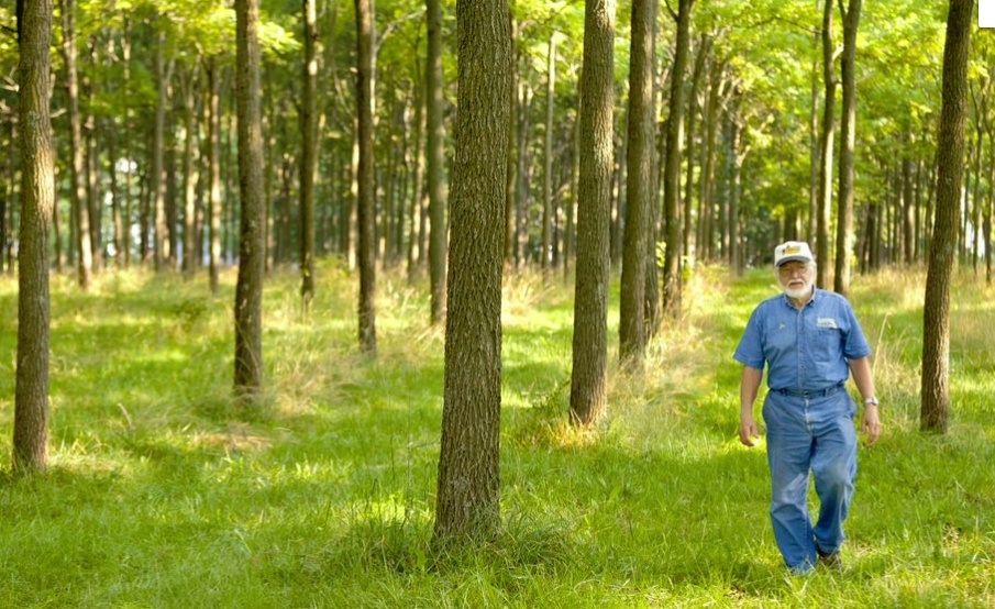 In his lifetime, Jay Lehman has planted tens of thousands of trees.
