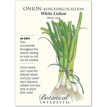 Onion Bunching/Scallion White Lisbon Seeds