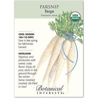 Parsnip Turga Organic Heirloom Seeds