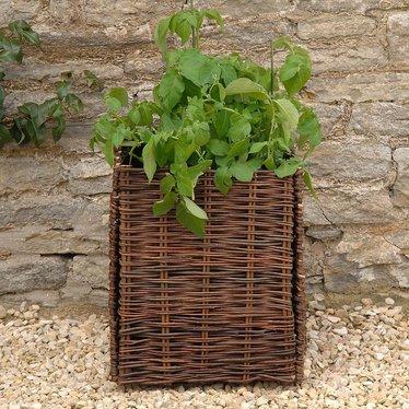 Square Willow Potato Planter