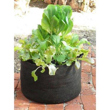 Reusable 5-Gallon Fabric Pot
