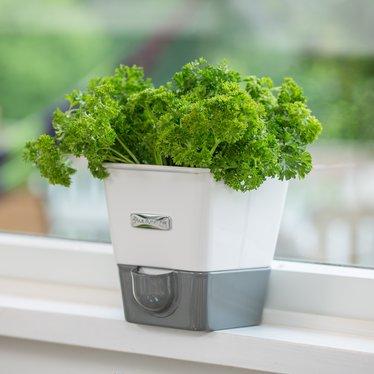 Self-Watering Herb Grower