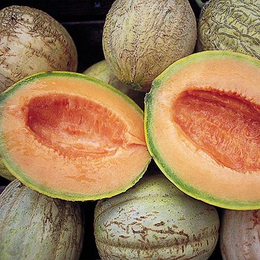 Amish Muskmelon Seeds