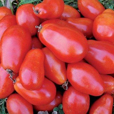 Martino's Roma Tomato Seeds