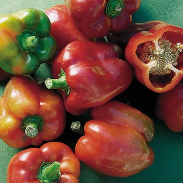 Bull Nose Bell Pepper Seeds - Sweet