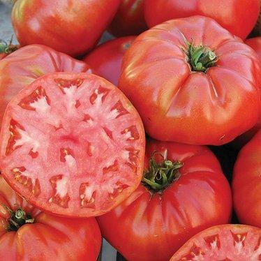 Mortgage Lifter Tomato (Halladay's) Seeds