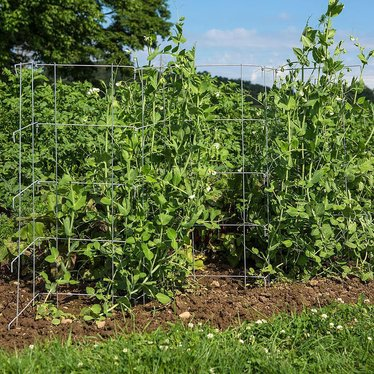 Pea Fence - Set of 2