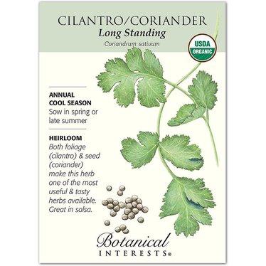 Cilantro/Coriander Long Standing Organic Heirloom Seeds