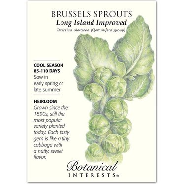 Brussels Sprouts Long Island Improved Heirloom Seeds