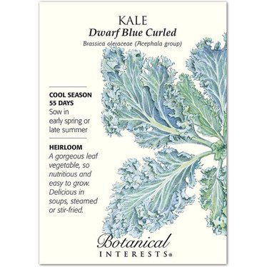 Kale Dwarf Blue Curled Heirloom Seeds