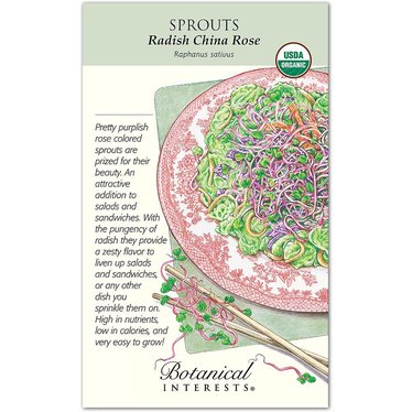 Sprouts Radish China Rose Organic Seeds