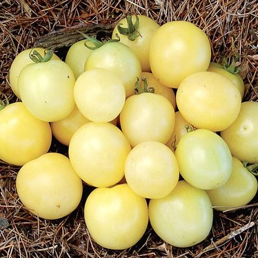 White Cherry Tomato Seeds