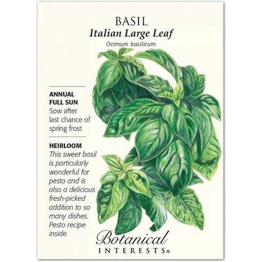 Basil Italian Large Leaf Heirloom Seeds