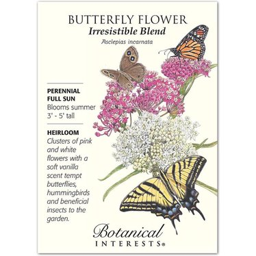 Butterfly Flower Irresistible Blend Heirloom Seeds