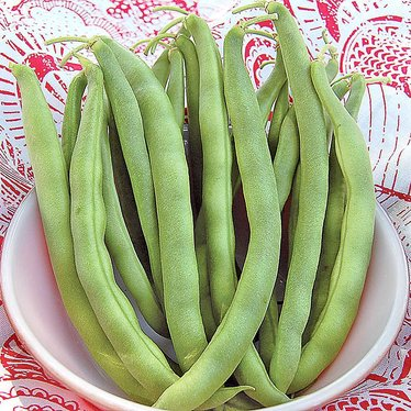 Kentucky Wonder Bush Bean Seeds